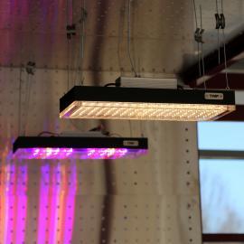 TRIF FITO - светодиодные фитолампы для выращивания растений в оранжереях