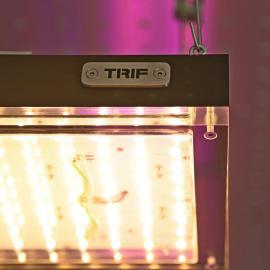 TRIF |Фитолампы разных видов от производителя
