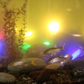 Водонепроницаемые светильники в виде камней LED OLIVA