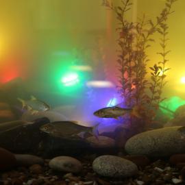 PIN AQUA - светильники TRIF