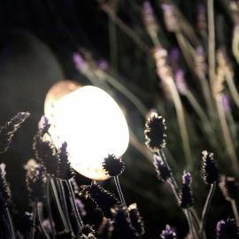 Многофункциональные светодиодные светильники для сада TRIF UNIversal